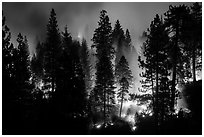 Forest fire. Kings Canyon National Park ( black and white)