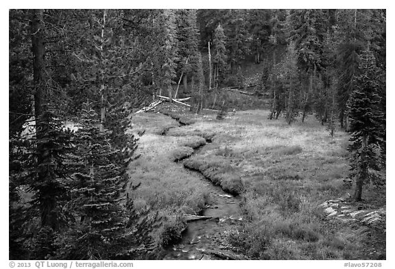 Kings Creek, meadow and forest. Lassen Volcanic National Park (black and white)