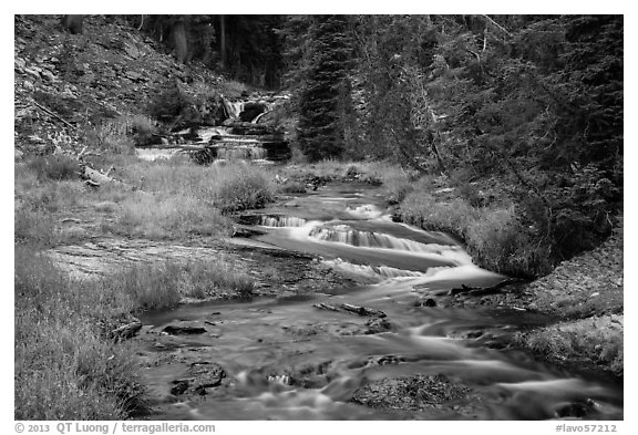 Kings Creek cascades in forest. Lassen Volcanic National Park (black and white)