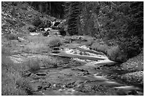 Kings Creek cascades in forest. Lassen Volcanic National Park ( black and white)