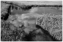 Cloud reflected in Kings Creek. Lassen Volcanic National Park ( black and white)