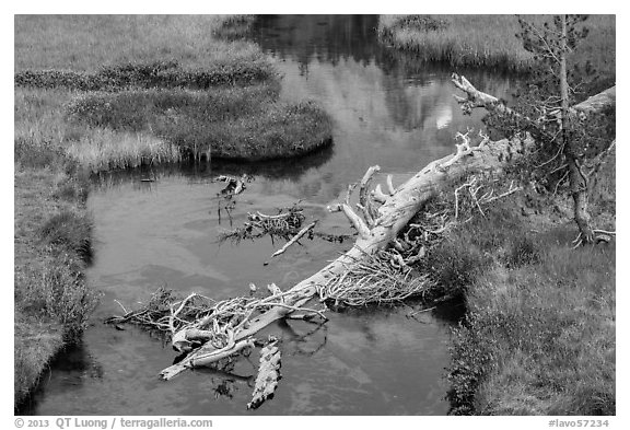 Fallen tree in Kings Creek with Lassen Peak reflection. Lassen Volcanic National Park (black and white)
