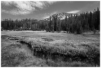 Upper Meadow with stream in late summer. Lassen Volcanic National Park ( black and white)