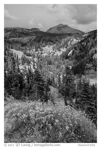 Rabbitbrush in bloom, forested valley, and Lassen Peak. Lassen Volcanic National Park (black and white)