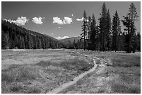 Trail, Warner Valley. Lassen Volcanic National Park ( black and white)