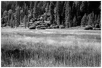 Drakesbad meadow, late summer. Lassen Volcanic National Park ( black and white)