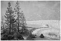 Trees and cracked mud, Boiling Springs Lake. Lassen Volcanic National Park ( black and white)