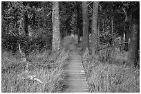 Boardwalk in meadow, Hot Springs Creek. Lassen Volcanic National Park ( black and white)