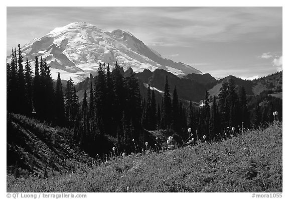 Mt Rainier from Tipsoo Lake area, afternoon. Mount Rainier National Park (black and white)