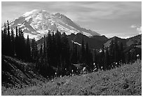 Mt Rainier from Tipsoo Lake area, afternoon. Mount Rainier National Park, Washington, USA. (black and white)