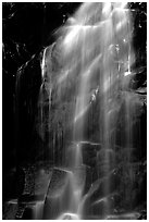 Waterfall in Carbon rainforest area. Mount Rainier National Park ( black and white)