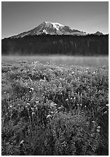 Wildflowers, Reflection Lake, and Mt Rainier, sunrise. Mount Rainier National Park ( black and white)