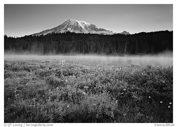 Wildflowers, Reflection Lake and Mt Rainier,  sunrise. Mount Rainier National Park (black and white)