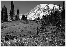 Meadow, wildflowers, trees, and Mt Rainier, Paradise. Mount Rainier National Park, Washington, USA. (black and white)