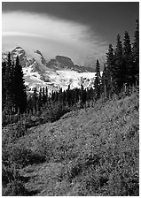 Meadow below Mount Rainier caped by cloud. Mount Rainier National Park, Washington, USA. (black and white)