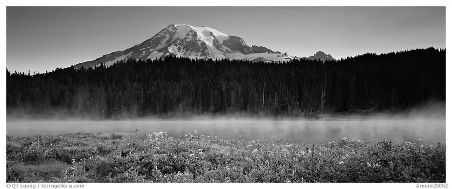 Wildlflowers, rising fog, and Mt Rainer at dawn. Mount Rainier National Park (black and white)