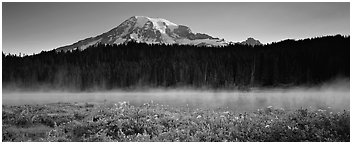 Wildlflowers, rising fog, and Mt Rainer at dawn. Mount Rainier National Park (Panoramic black and white)