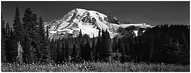 Flowers, trees, and snow-covered mountain. Mount Rainier National Park (Panoramic black and white)
