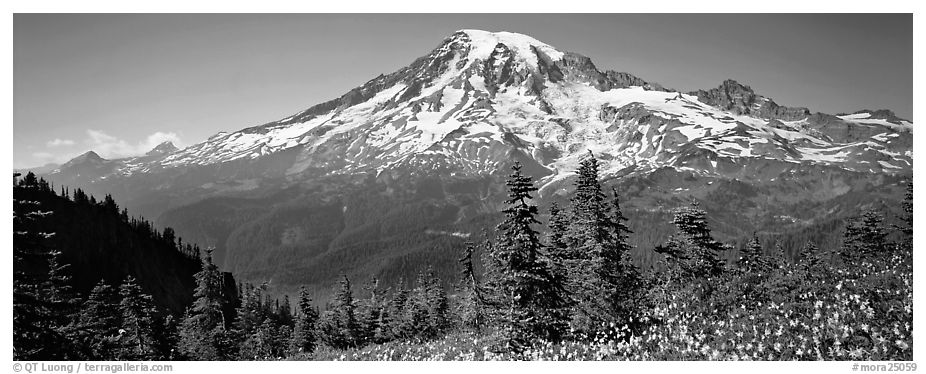 Avalanche lillies and Mount Rainier. Mount Rainier National Park (black and white)