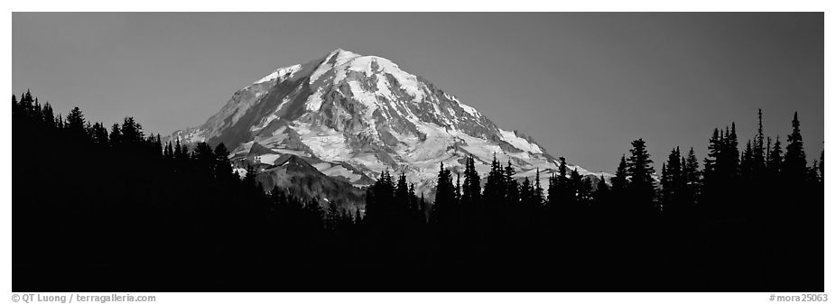 Mount Rainier above forest in silhouette. Mount Rainier National Park (black and white)