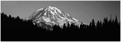 Mount Rainier above forest in silhouette. Mount Rainier National Park (Panoramic black and white)