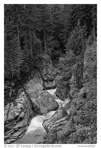Creek in verdant forest. Mount Rainier National Park (black and white)