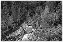 Van Trump Creek flows in lush forest. Mount Rainier National Park ( black and white)