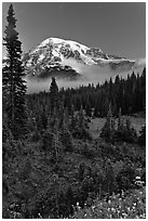 Conifer forest, meadows, and Mt Rainier viewed from below Paradise. Mount Rainier National Park, Washington, USA. (black and white)