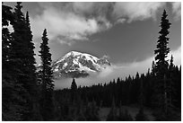 Conifers, clouds, and Mount Rainier. Mount Rainier National Park, Washington, USA. (black and white)