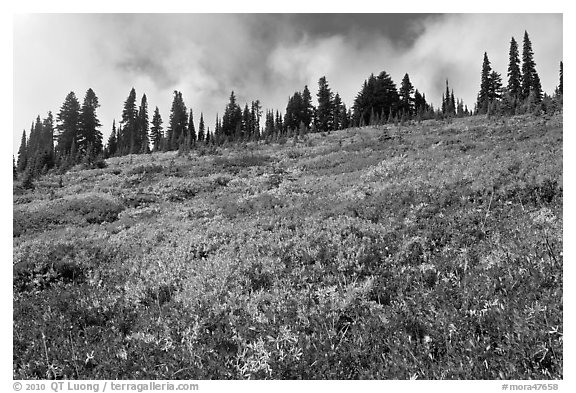 Brighly colored meadow and tree line in autumn. Mount Rainier National Park (black and white)