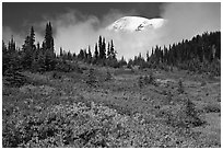Mount Rainier emerging above clouds and meadows in autumn. Mount Rainier National Park, Washington, USA. (black and white)