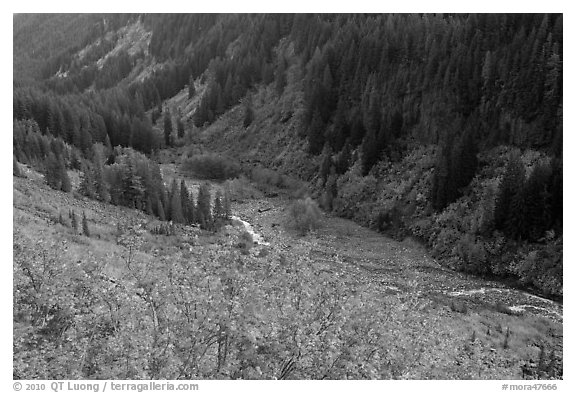 Stevens Canyon in autumn. Mount Rainier National Park (black and white)