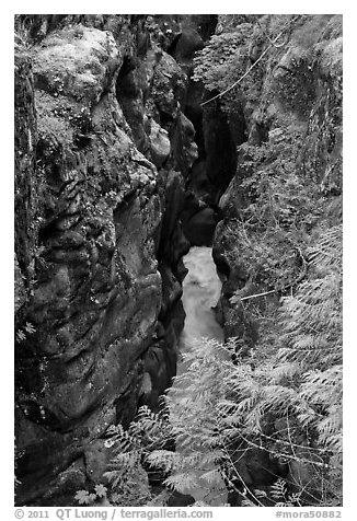 Box Canyon. Mount Rainier National Park (black and white)