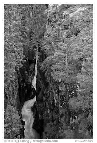 Black and white picture photo deep narrow box canyon with vertical walls mount rainier national park