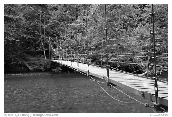 Suspension footbridge over Ohanapecosh River. Mount Rainier National Park (black and white)