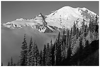 Forest, Mt Rainier and fog, early morning. Mount Rainier National Park, Washington, USA. (black and white)