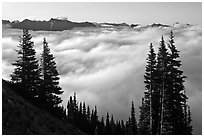 Sea of clouds and Governors Ridge, early morning. Mount Rainier National Park, Washington, USA. (black and white)