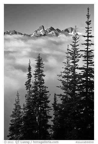 Spruce trees and cloud-filled valley. Mount Rainier National Park (black and white)