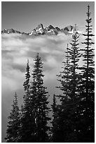 Spruce trees and cloud-filled valley. Mount Rainier National Park, Washington, USA. (black and white)