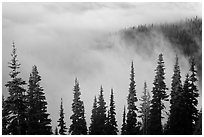 Trees, ridge, and fog. Mount Rainier National Park, Washington, USA. (black and white)