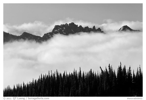 Dark conifers and ridge emerging from clouds. Mount Rainier National Park (black and white)
