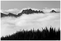 Dark conifers and ridge emerging from clouds. Mount Rainier National Park ( black and white)
