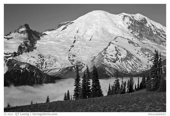 Meadow and Mt Rainier above fog-filled valley. Mount Rainier National Park (black and white)