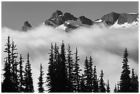 Trees, fog, and ridge, Sunrise. Mount Rainier National Park, Washington, USA. (black and white)