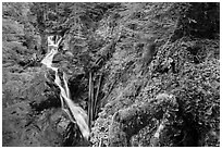 Multi-tiered Deer Creek Falls dropping in forest. Mount Rainier National Park ( black and white)