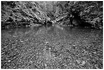 Pebbles in the bed of Panther Creek. Mount Rainier National Park ( black and white)