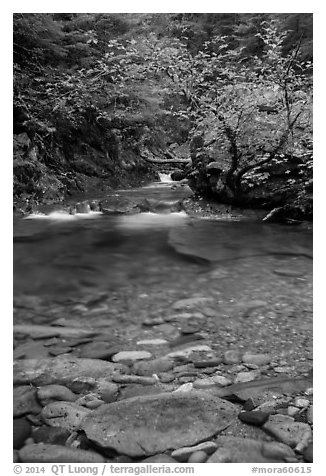 Water flowing in Panther Creek. Mount Rainier National Park (black and white)