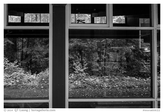 Rain forest window reflexion, Ohanapecosh Visitor Center. Mount Rainier National Park (black and white)