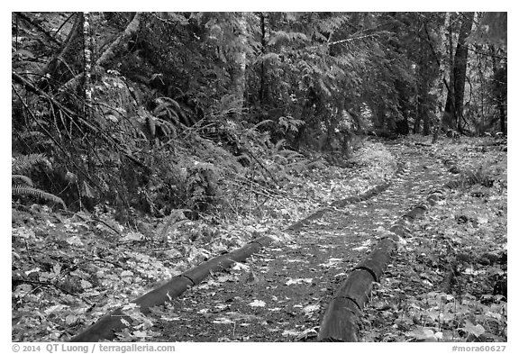 Forest trail in autumn, Ohanapecosh. Mount Rainier National Park (black and white)