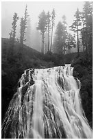 Narada Falls and trees in fog. Mount Rainier National Park ( black and white)